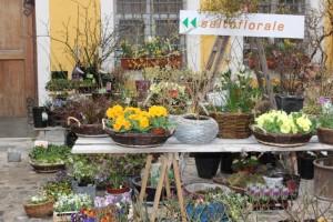 saltoflorale, Innenhof, Primel, Tulpen, Zwiebeln, Kräuter, Rosen